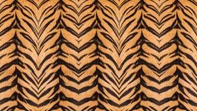 Όμορφη γούνα τιγρών Στοκ εικόνες με δικαίωμα ελεύθερης χρήσης