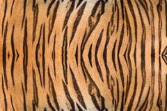 Όμορφη γούνα τιγρών Στοκ Εικόνα