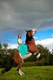 Όμορφη γυναίκα με ένα άλογο στον τομέα Κορίτσι επάνω Στοκ φωτογραφίες με δικαίωμα ελεύθερης χρήσης