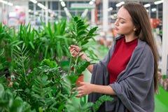 Όμορφη γυναίκα που αγοράζει τις πράσινες εγκαταστάσεις λουλουδιών στο ανθοπωλείο Στοκ φωτογραφίες με δικαίωμα ελεύθερης χρήσης