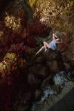 Όμορφη γυναίκα στο δάσος νεράιδων Στοκ εικόνα με δικαίωμα ελεύθερης χρήσης