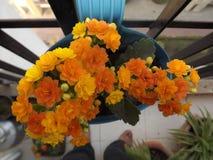Όμορφη δέσμη των κίτρινων λουλουδιών στοκ εικόνα