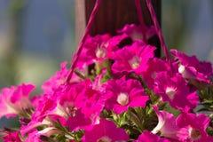 Όμορφη διακόσμηση διακοσμήσεων λουλουδιών στην οδό υπαίθρια Στοκ φωτογραφίες με δικαίωμα ελεύθερης χρήσης