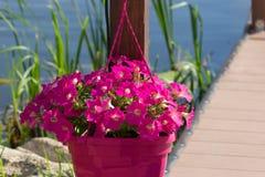 Όμορφη διακόσμηση διακοσμήσεων λουλουδιών στην οδό υπαίθρια Στοκ εικόνα με δικαίωμα ελεύθερης χρήσης