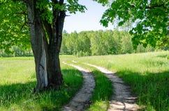 Όμορφη εθνική οδός στο δάσος στοκ εικόνα με δικαίωμα ελεύθερης χρήσης