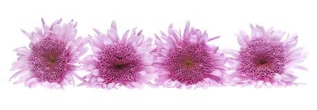 όμορφη εικόνα λουλουδι Στοκ Εικόνα