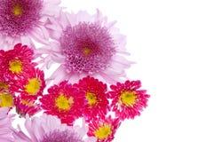 όμορφη εικόνα λουλουδι Στοκ εικόνα με δικαίωμα ελεύθερης χρήσης