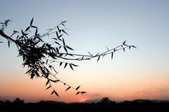 Όμορφη εικόνα σκιαγραφιών φύσης Στοκ Φωτογραφίες