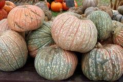 Όμορφη εικόνα υποβάθρου των φωτεινών πορτοκαλιών, πράσινων και άσπρων κολοκυθών και της κολοκύνθης για την πώληση στην αγορά φθιν στοκ φωτογραφίες με δικαίωμα ελεύθερης χρήσης