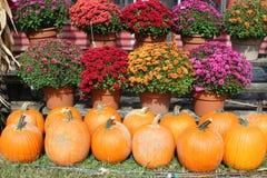 Όμορφη εικόνα υποβάθρου των φωτεινών ρόδινων, κόκκινων και πορφυρών λουλουδιών με τις πορτοκαλιές κολοκύθες στην αγορά φθινοπώρου στοκ εικόνα με δικαίωμα ελεύθερης χρήσης