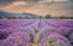 Όμορφη εικόνα lavender του τομέα Στοκ Φωτογραφία