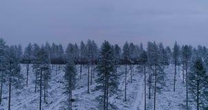 Όμορφη εναέρια φωτογραφία των δέντρων στο δάσος στη Σουηδία απόθεμα βίντεο
