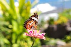 Όμορφη εξωτική τροπική πεταλούδα στο πάρκο του νησιού του Μπαλί, Ινδονησία Στοκ Φωτογραφία
