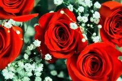 Όμορφη εορταστική ανθοδέσμη των φωτεινών κόκκινων τριαντάφυλλων στοκ φωτογραφίες