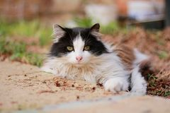 Όμορφη επισημασμένη γάτα στοκ φωτογραφία με δικαίωμα ελεύθερης χρήσης
