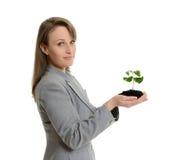 Όμορφη επιχειρησιακή γυναίκα που κρατά πράσινες εγκαταστάσεις σε ένα δοχείο Στοκ Εικόνα