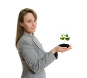 Όμορφη επιχειρησιακή γυναίκα που κρατά πράσινες εγκαταστάσεις σε ένα δοχείο Στοκ Εικόνες