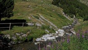 Όμορφη λεπτομέρεια ποταμών στα Πυρηναία (Ισπανία) Vall de Nuria απόθεμα βίντεο