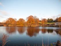 Όμορφη ζαλίζοντας καμμένος χρυσή όχθη της λίμνης δέντρων φθινοπώρου landscap Στοκ φωτογραφία με δικαίωμα ελεύθερης χρήσης
