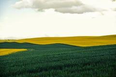 Όμορφη ζωηρόχρωμη άποψη των ανθίζοντας εγκαταστάσεων συναπόσπορων και αγροτικός στοκ εικόνα