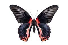 Όμορφη ζωηρόχρωμη πεταλούδα που απομονώνεται στο λευκό Στοκ Φωτογραφία