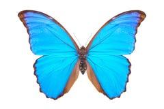Όμορφη ζωηρόχρωμη πεταλούδα που απομονώνεται στο λευκό Στοκ Εικόνα