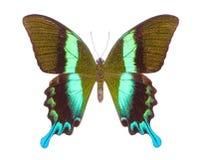 Όμορφη ζωηρόχρωμη πεταλούδα που απομονώνεται στο λευκό Στοκ Εικόνες