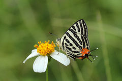 Όμορφη ζωηρόχρωμη πεταλούδα στη φύση Στοκ εικόνα με δικαίωμα ελεύθερης χρήσης