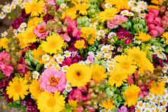 Όμορφη ζωηρόχρωμη συλλογή του θερινού εορτασμού άνοιξης λουλουδιών Στοκ εικόνα με δικαίωμα ελεύθερης χρήσης