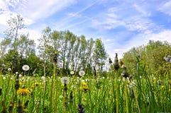 Όμορφη ζωηρόχρωμη φύση άνοιξη Στοκ φωτογραφίες με δικαίωμα ελεύθερης χρήσης