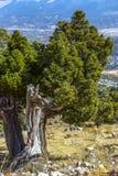 Όμορφη ζωηρόχρωμη φύση Στοκ Φωτογραφίες
