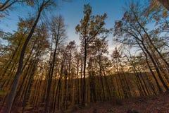 Όμορφη ηλιόλουστη ημέρα στο δάσος στοκ εικόνα