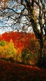 Όμορφη ηλιόλουστη ημέρα στο χρυσό δάσος φθινοπώρου στοκ εικόνα