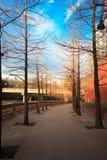 Όμορφη ημέρα ανατολής ή ηλιοβασιλέματος, στην οδική οδό, κάτω από το μπλε Στοκ εικόνα με δικαίωμα ελεύθερης χρήσης