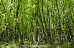 Όμορφη ηλιόλουστη ημέρα σε ένα πράσινο δάσος Στοκ Φωτογραφίες