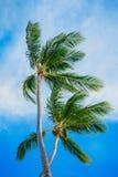 Όμορφη ηλιόλουστη ημέρα σε Punta Cana Στοκ φωτογραφίες με δικαίωμα ελεύθερης χρήσης