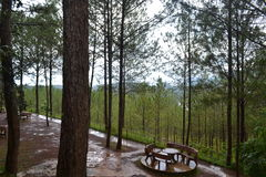 Όμορφη θέση, φύση, δάσος, συννεφιασμένος Στοκ φωτογραφία με δικαίωμα ελεύθερης χρήσης