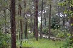 Όμορφη θέση, φύση, δάσος, συννεφιασμένος Στοκ Φωτογραφίες