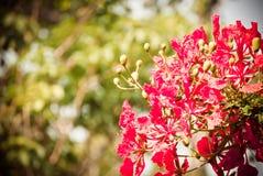 Όμορφη θαμπάδα υποβάθρου λουλουδιών Στοκ Φωτογραφία