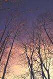 Όμορφη θερινή περίοδο συγκεκριμένη φωτογραφία Μεγάλοι δέντρα και κλάδοι που στέκονται ψηλοί με τα καλά φω'τα και την ηλιοφάνεια/η Στοκ Εικόνες