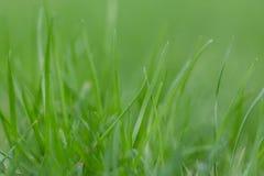 Όμορφη θερινή πράσινη χλόη hellosummer Στοκ Φωτογραφία