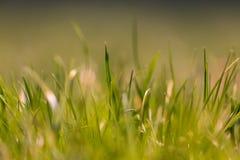 Όμορφη θερινή πράσινη χλόη hellosummer Στοκ Φωτογραφίες