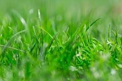 Όμορφη θερινή πράσινη χλόη hellosummer Στοκ Εικόνα
