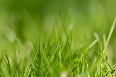 Όμορφη θερινή πράσινη χλόη hellosummer Στοκ Εικόνες