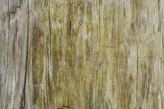 Όμορφη διαμορφωμένη επιφάνεια του απολιθώματος Στοκ Φωτογραφία