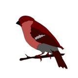 Όμορφη διανυσματική απεικόνιση Bullfinch Στοκ εικόνα με δικαίωμα ελεύθερης χρήσης