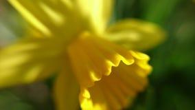 Όμορφη κίτρινη μακρο φωτογραφία λουλουδιών Στοκ φωτογραφία με δικαίωμα ελεύθερης χρήσης