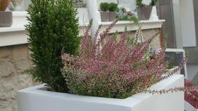 Όμορφη καυτή σκάφη στον κήπο με τα λουλούδια φιλμ μικρού μήκους