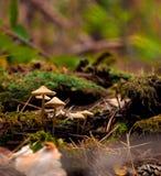 Όμορφη κινηματογράφηση σε πρώτο πλάνο των δασικών μανιταριών στοκ φωτογραφία