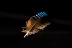 Όμορφη κινηματογράφηση σε πρώτο πλάνο φτερών του ευρασιατικού πουλιού του Jay Στοκ Εικόνες